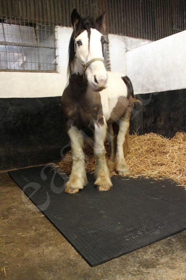 Horse Stable Floor Mats EVA 6ft x 4ft Cushioned Equine Matting Flooring Easimat